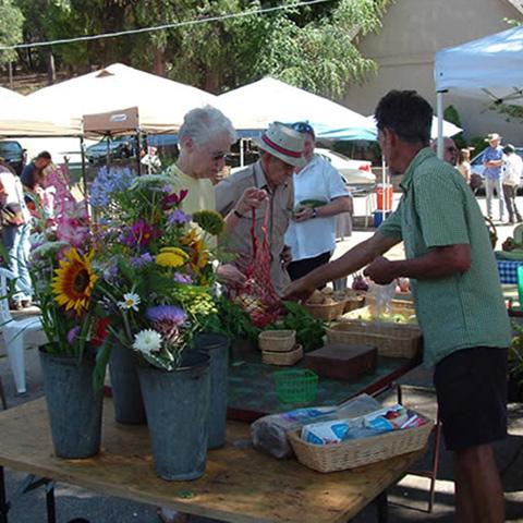 Amador Farmers Market